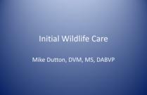 Initial Wildlife Care