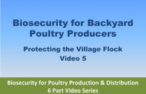 Biosecurity for Backyard Poultry Producers - Video 5 of Biosecurity for Poultry Production & Distribution