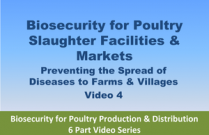 Biosecurity for Poultry Slaughter Facilities & Markets - Video 4 from Biosecurity for Poultry Production & Distribution 6 Part Video Series