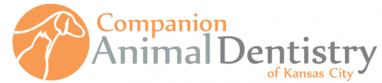 Companion Animal Dentistry of Kansas City | Veterinary Training Company