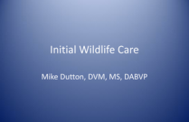 Initial Wildlife Care