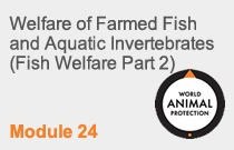 Module 24 Welfare of Farmed Fish and Aquatic Invertebrates (Fish Welfare Part 2)