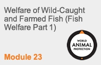 Module 23  Welfare of Wild-Caught and Farmed Fish (Fish Welfare Part 1)