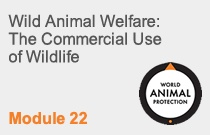 Module 22 Wild Animal Welfare: The Commercial Use of Wildlife