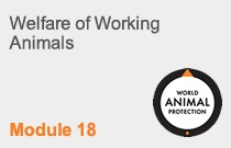Module 18 Welfare of Working Animals