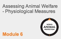 Module 6 Assessing Animal Welfare – Physiological Measures