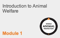 Module 1 Introduction to Animal Welfare