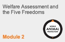Module 2 Welfare Assessment and the Five Freedoms