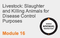 Module 16 Livestock: Slaughter and Killing Animals for Disease Control Purposes