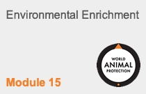 Module 15 Environmental Enrichment