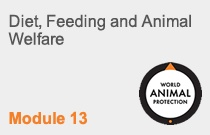 Module 13 Diet, Feeding and Animal Welfare
