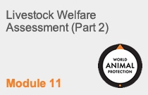 Module 11 Livestock Welfare Assessment (Part 2)