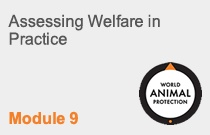 Module 9: Assessing Welfare in Practice