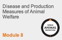 Module 8 Disease and Production Measures of Animal Welfare
