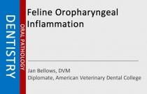 Feline Oropharyngeal Inflammation