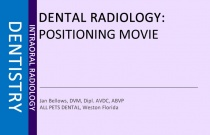 Dental Radiology Positioning Movie (Feline)