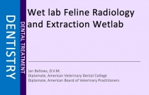 Feline Radiology and Extraction Wet Lab