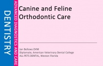 Canine and Feline Orthodontic Care