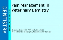 Pain Management in Dentistry
