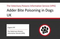 Adder Bite in Dogs