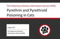 Pyrethrin and Pyrethroid Poisoning in Cats