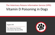 Vitamin D Poisoning in Dogs