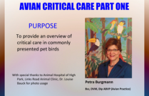 Avian Critical Care Part One