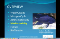 B-1001 Jones - Nitrogen Cycle & Biofiltration