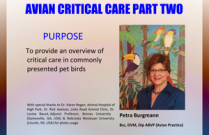 Avian Critical Care Part Two