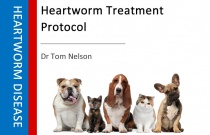 Heartworm Treatment Protocol