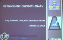 Metronomic Chemotherapy in Veterinary Oncology