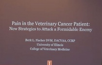Cancer Pain:  Using New Strategies to Attack a Formidable Enemy