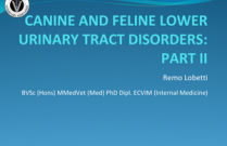 Canine and Feline Lower Urinary Tract Disorders Part 2