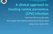 A clinical approach to treating canine parvovirus infection