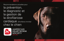 2014 AHS Canine Heartworm Guidelines FRENCH