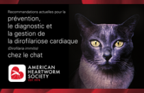 2014 AHS Feline Heartworm Guidelines FRENCH