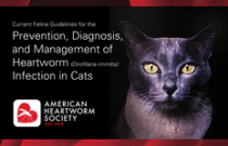 2014 AHS Feline Heartworm Guidelines ENGLISH