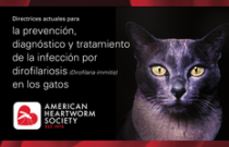 2014 AHS Feline Heartworm Guidelines SPANISH