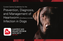 2014 AHS Canine Heartworm Guidelines ENGLISH