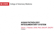 Avian Pathology - Integumentary System