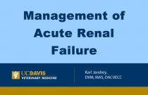 Management of Acute Renal Faliure