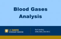 Blood Gases Analysis