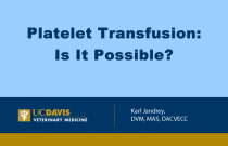 Platelet Transfusion: Is It Possible?