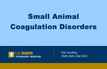 Small Animal Coagulation Disorders