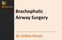Surgery of the Patient with Brachephalic Airway Syndrome