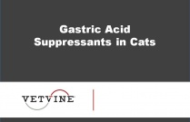 Gastric Acid Suppressants in Cats