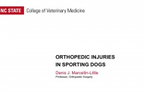 Canine Orthopedics Course Part 4: Orthopedic Injuries in Sporting Dogs