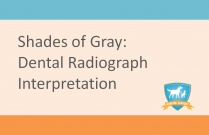 Interpretation of Dental Radiographs