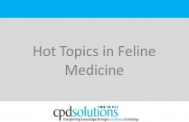 Hot Topics in Feline Medicine
