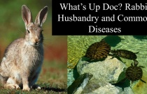 What's Up Doc - Rabbit Husbandry and Common Diseases